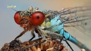 حشرات زیبا