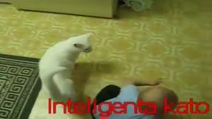 بچه شیطون و گربه باهوش