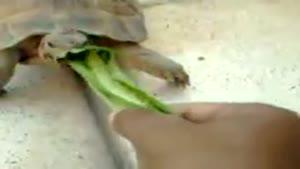 غذادادن به لاکپشت