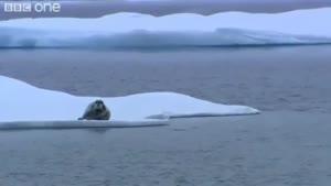 شکار خرس قطبی