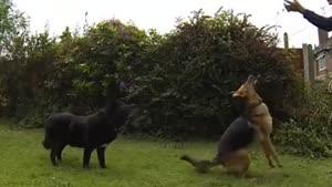 سگ های احمق و بازیگوش