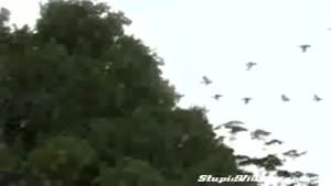 پرنده های بازیگوش