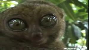 بامزه ترین چشم های دنیا