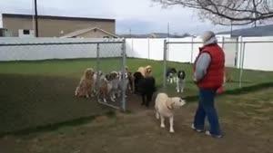 سگ ها باهوش ترین حیوانات هستند