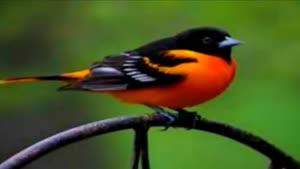 پرندگان خاص و زیبا ۲