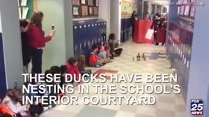 اردوی اردک و جوجه هاش تو مدرسه