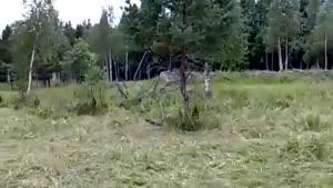ارتش استتار شده در جنگل