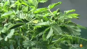 گیاهان هم درد را حس میکنند
