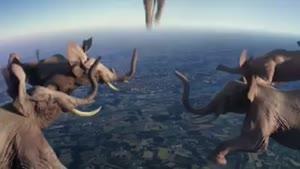 ساخت ویدئوی جالب از حیوانات