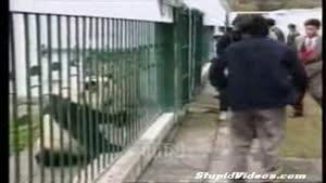 حمله پاندا به اور کت