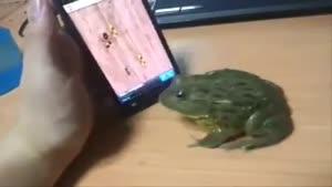 بازی کردن قورباغه با موبایل