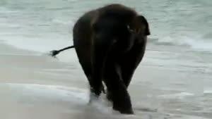 آب تنی کردن فیل تو دریا