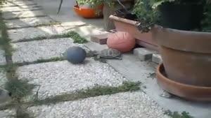بازی کردن سگ و لاکپشت