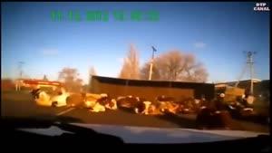 تصادف - چپ شدن تریلر حمل گاو ...