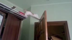 کلیپ سوتی حیوانات - حیوانات خنده دار