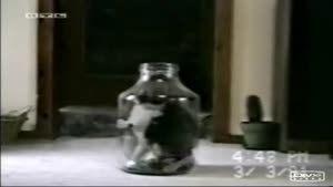 ترشی گربه