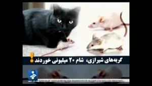 شام ۲۰میلیونی گربه های شیرازی