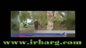 قاسم سلیمانی در بی بی سی