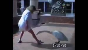 عاقبت شوخی و بازی با حیوانات