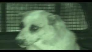 سگ پناهنده به حرم امام رضا