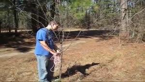 طرز کاشت درخت هلو