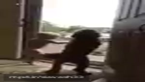 باحاااال سگه با بچه هماهنگن