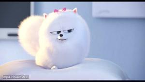انیمیشن جالب و خنده دار راز زندگی حیوانات خانگی