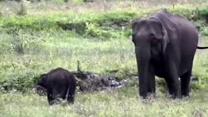 حیات وحش در هند