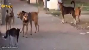 ترس ۵ سگ از گربه عصبانی