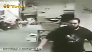 فیلم برخورد اولیه امواج زلزله به سگ و فرارش ۵ ثانیه پیش از تکان اصلی