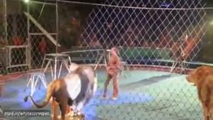 هرج و مرج در سیرک و حمله شیر ها به مربی بخت برگشته....