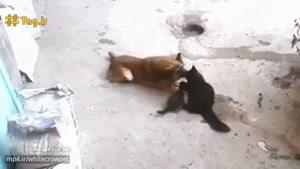 گربه ای که بچه هایش را به دیدن سگ دوست قدیمی اش می بردگربه ای که بچه هایش را به دیدن سگ دوست قدیمی ا