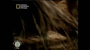 مستند فارسی - نبرد شکارچیان (مبارزان حیات وحش)
