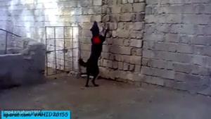 عاقبت سگ بازی-خورده شدن وحشت اور انسان توسط سگ