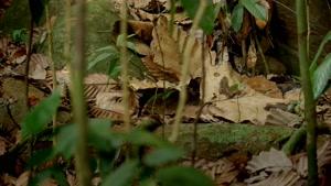 مستند گربه در جنگل