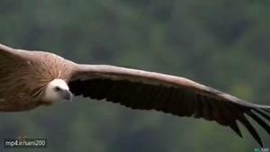 کلیپ زیبا از جانور های شگفت انگیز ودیدنی در کره زمین