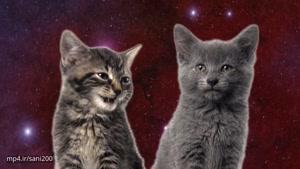 آهنگ خوندن گربه ها در فضا