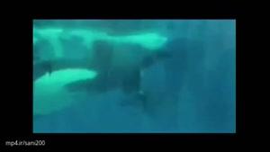 لحظه تولد یک نهنگ