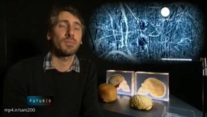 آخرین پژوهشها درباره حیرت آورترین اسرار مغز انسان