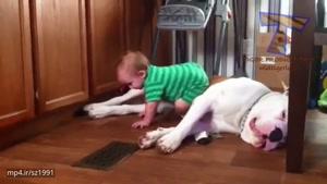 کودکان خنده داری که سگ ها رو ازار میدهند