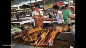 فستیوال خوردن سگ در چین