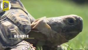 سریعترین لاکپشت-رکوردی دیگر از گینس