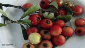 با خوردن این میوه کلسترول و اضطراب را نابود کنید