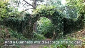 رکوردهای عجیب گینس