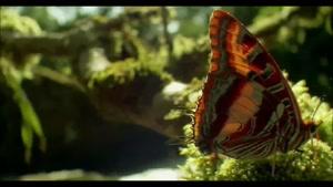 جنگل پروانه ها