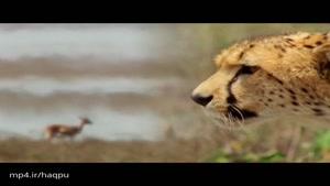 شکار ۲