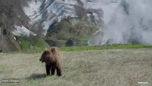 سرزمین خرس ها