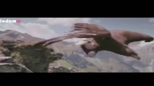 شکارگری عقاب