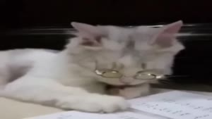 گربه کتاب خان