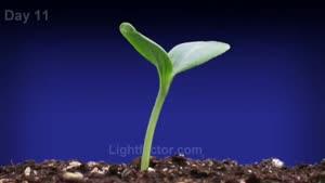 تایم لپس رشد گیاه هندوانه